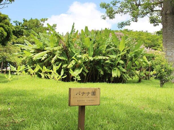 banana park