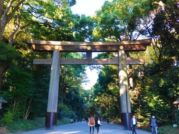 高さ12mもある明治神宮の木造の鳥居