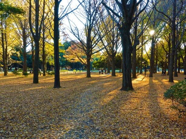 それぞれの過ごし方で楽しめる代々木公園
