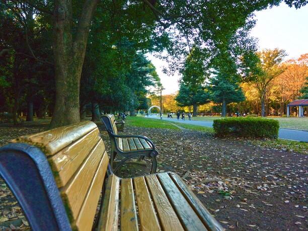 中央広場や多くのベンチもある代々木公園