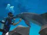 diver show